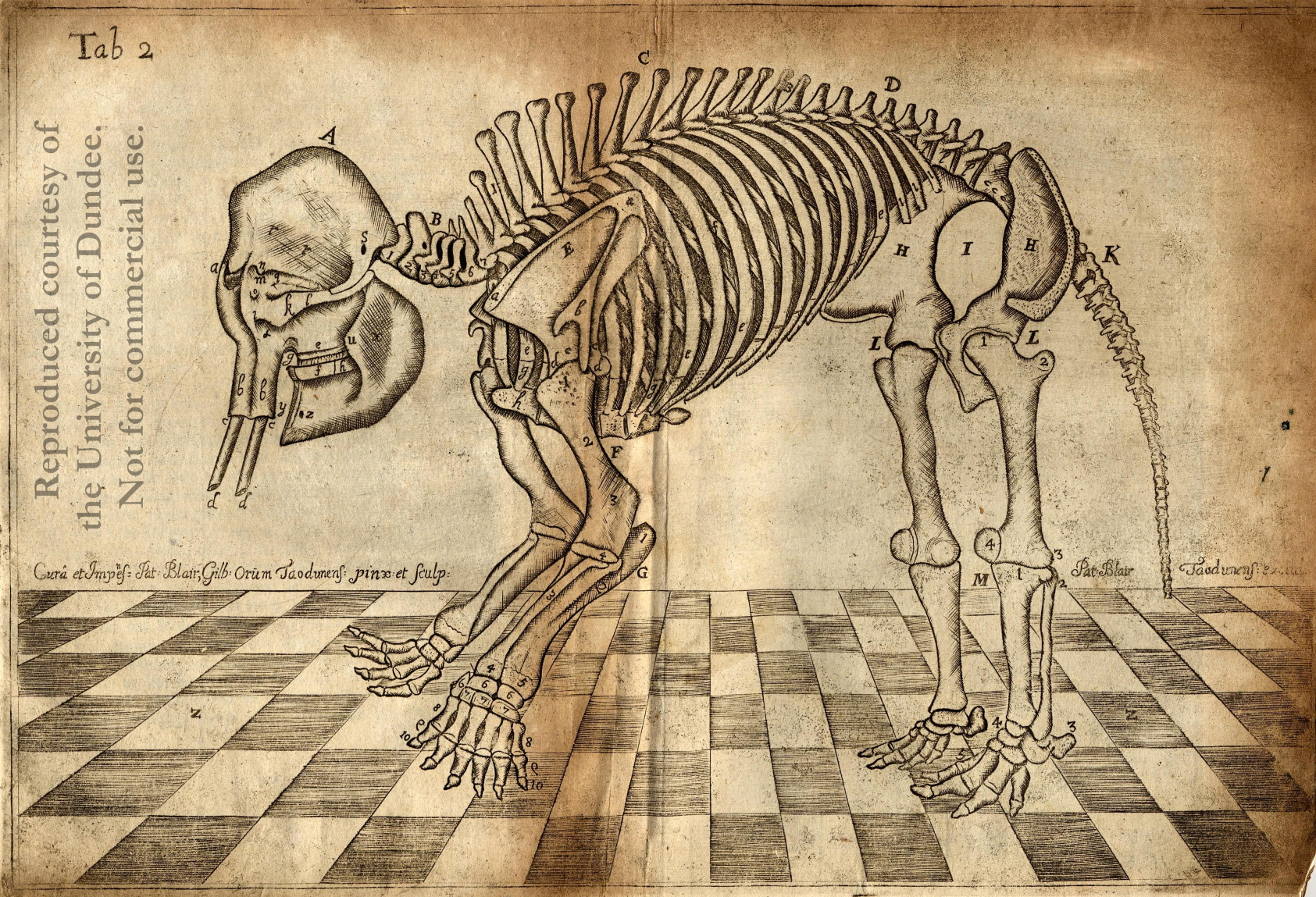 Class Notes from Dr John Barclay\'s lectures on Comparative Anatomy ...